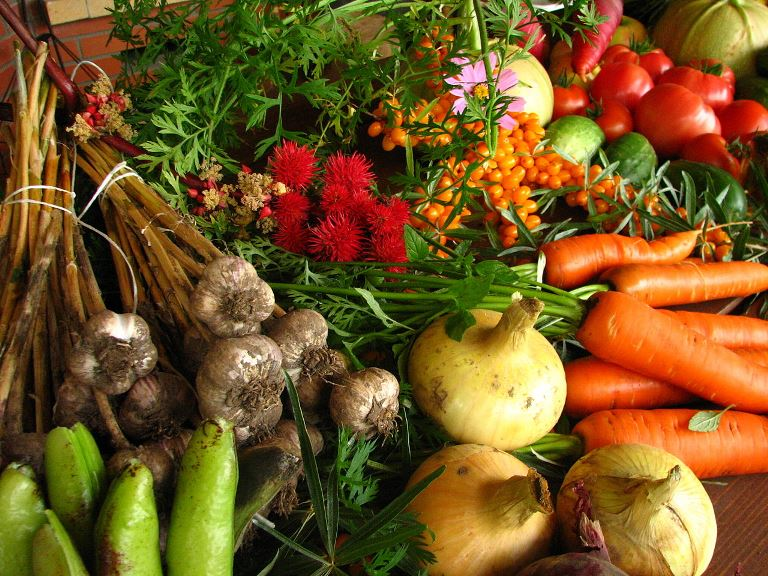 Agroecología para generar cultivos resilientes